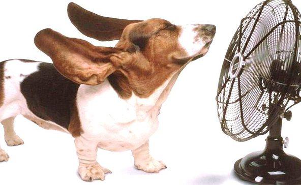 Óvjuk kedvenceinket is a hőségben!