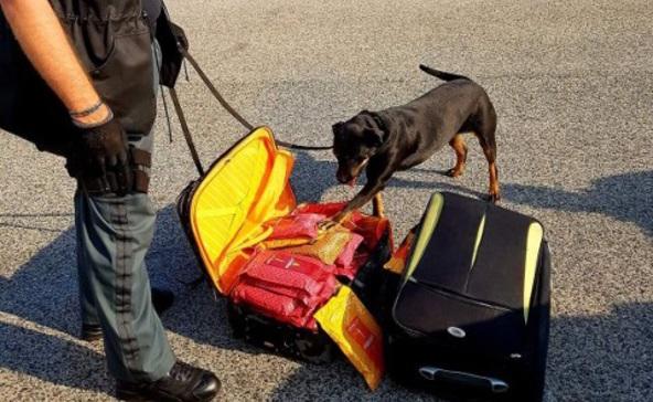 Négy millió forint értékű dohányt talált Boo, a szolgálati kutya