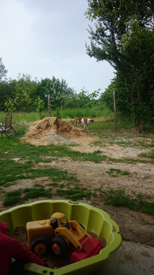 A falubeliek felvételei szerint mindenfelé szabadon garázdálkodnak a kutyák