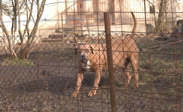 Megszólalt a támadó kutyák gazdája