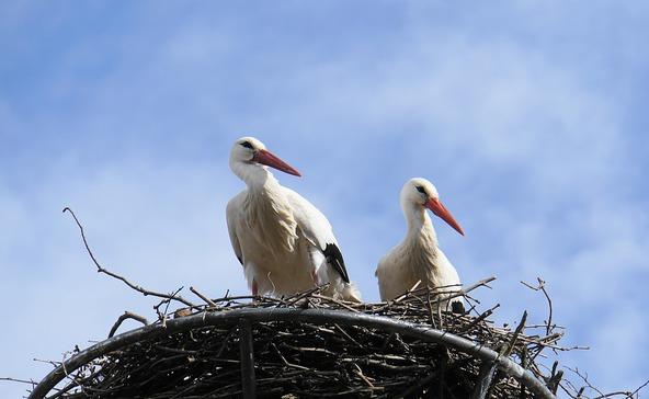 4 343 fészektartóval várja az E.ON a gólyákat