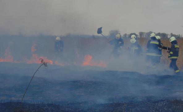 Száz hektáron égett le a nádas, és pusztult el élővilága