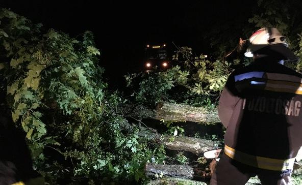 Kidőlt fa akadályozta a forgalmat az este