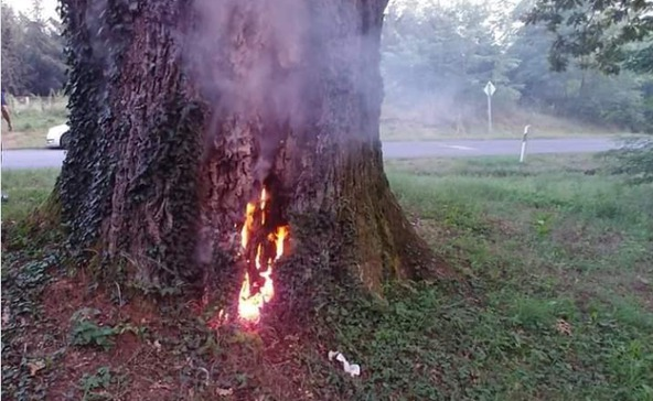 Felgyújtották a 300 éves híres barcsi tölgyet, Patkó Bandi fáját