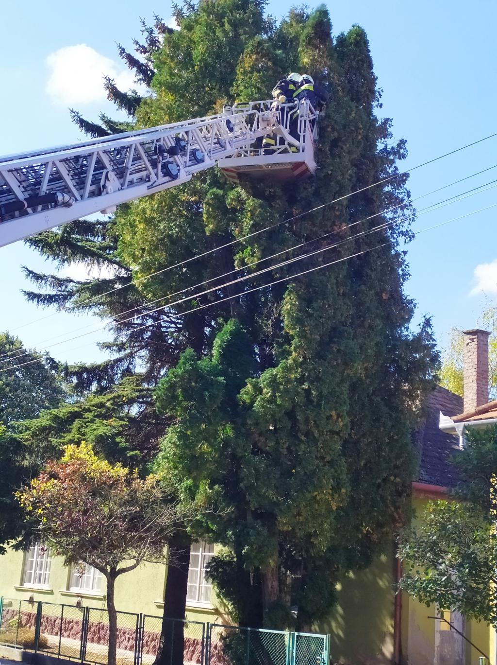 Kosárban emelték fel a tűzoltókat a fához