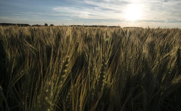 Csaknem 250 milliárd támogatást kaphatnak a gazdák