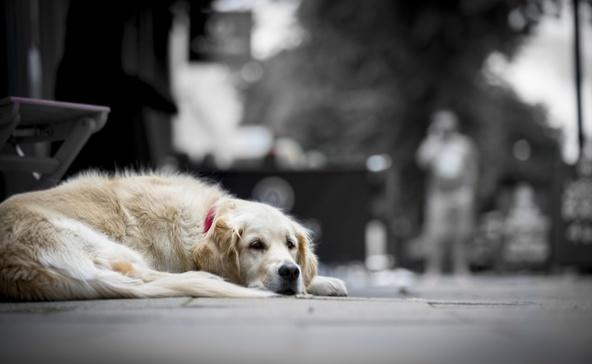 Szilveszter szökevény kutyái