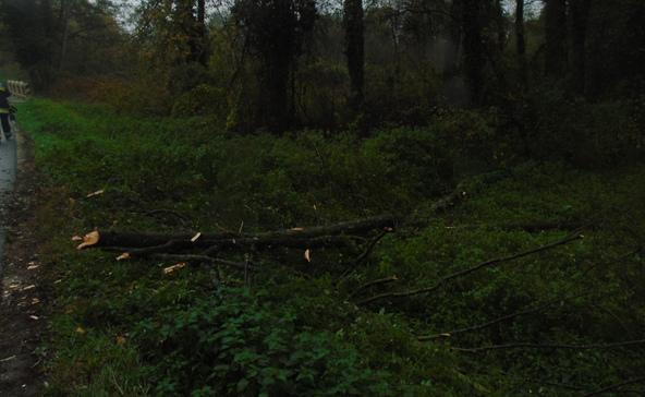 25 méteres fa dőlt az útra Mikében
