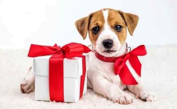 Karácsonyra állatSTOP-ot kérnek az állatvédők - videóval!