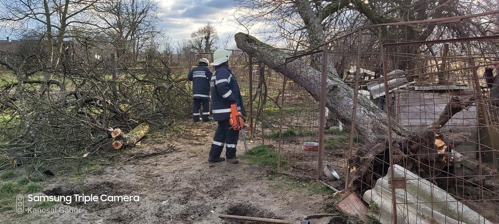 A kerítésre dőlt a fa