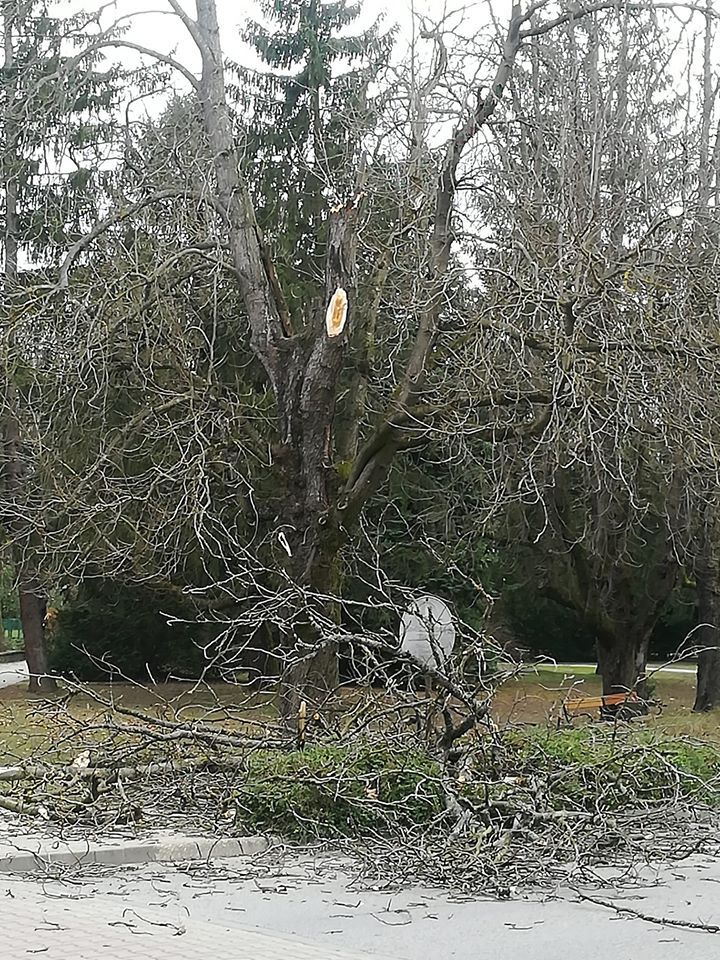 Megtépázza a szél a park fáit
