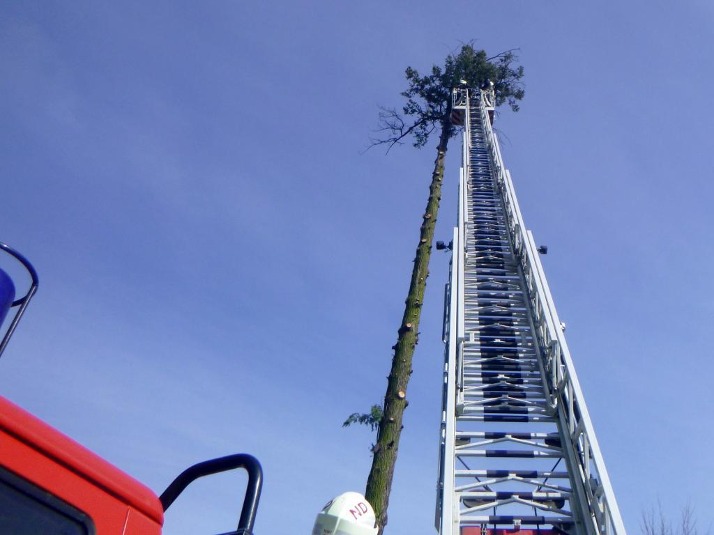 Megdőlt a hatalmas fa