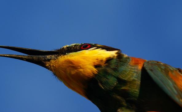 Kora tavaszi madárnyüzsgés
