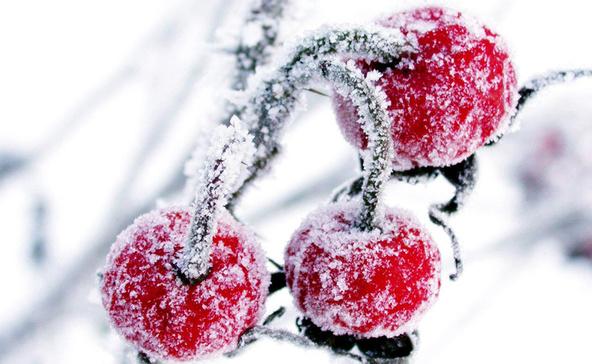 Ajjaj: komoly fagy jön, a gyümölcsfáknak annyi!