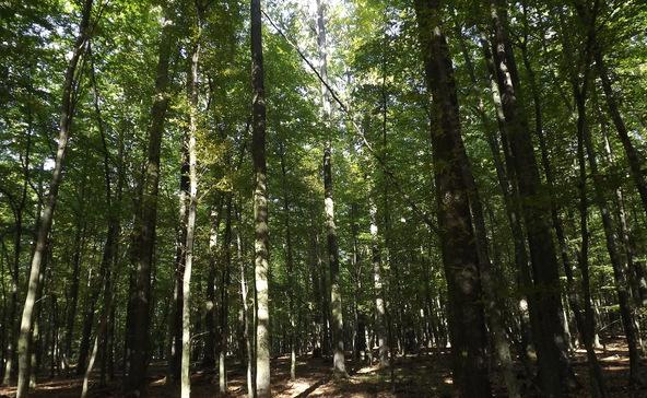 Hatvan hektár új erdőt telepített tavaly a SEFAG