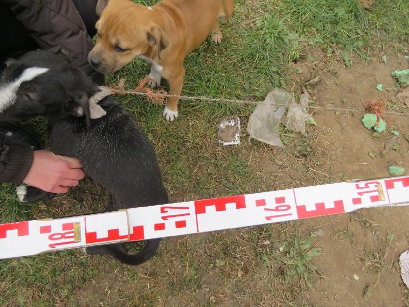 A kutyákat elkobozták
