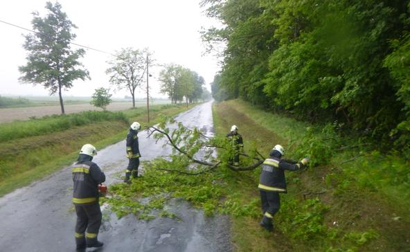 Úttestre dőlt fát távolítottak el a nagyatádi tűzoltók