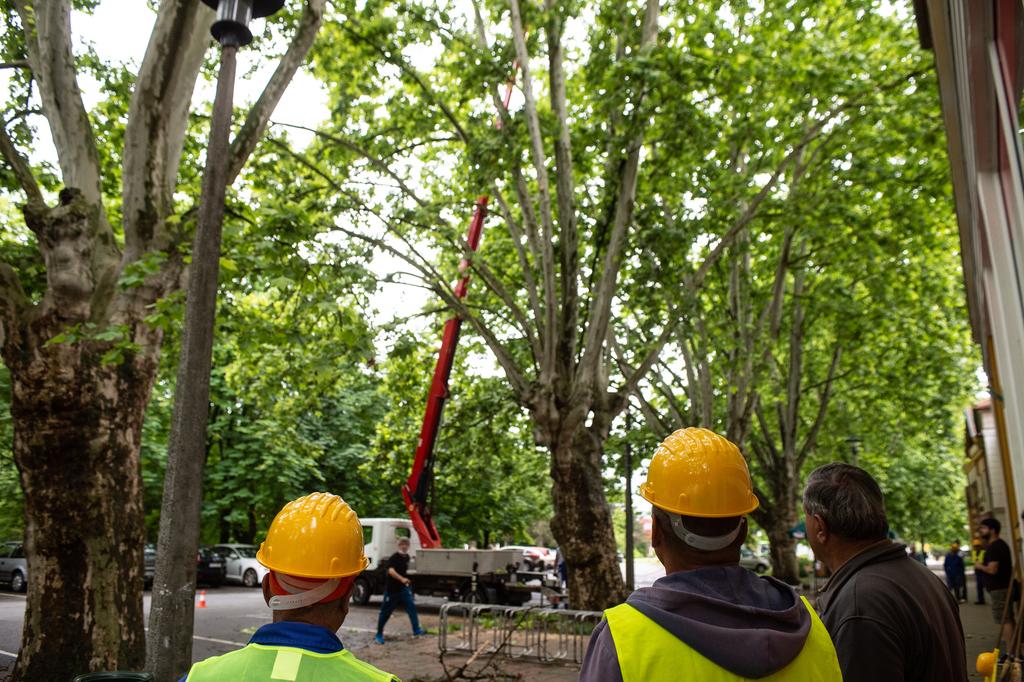A közfoglalkoztatottak a fák alatt várakoznak, hogy eltakarítsák a lehulló törmeléket