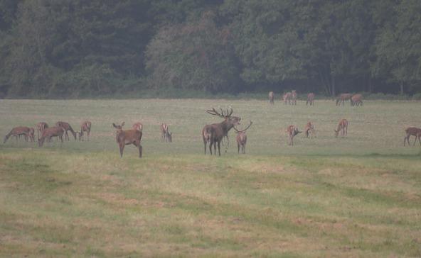 Gímbikáktól hangos az erdő - vadászat Kaszón