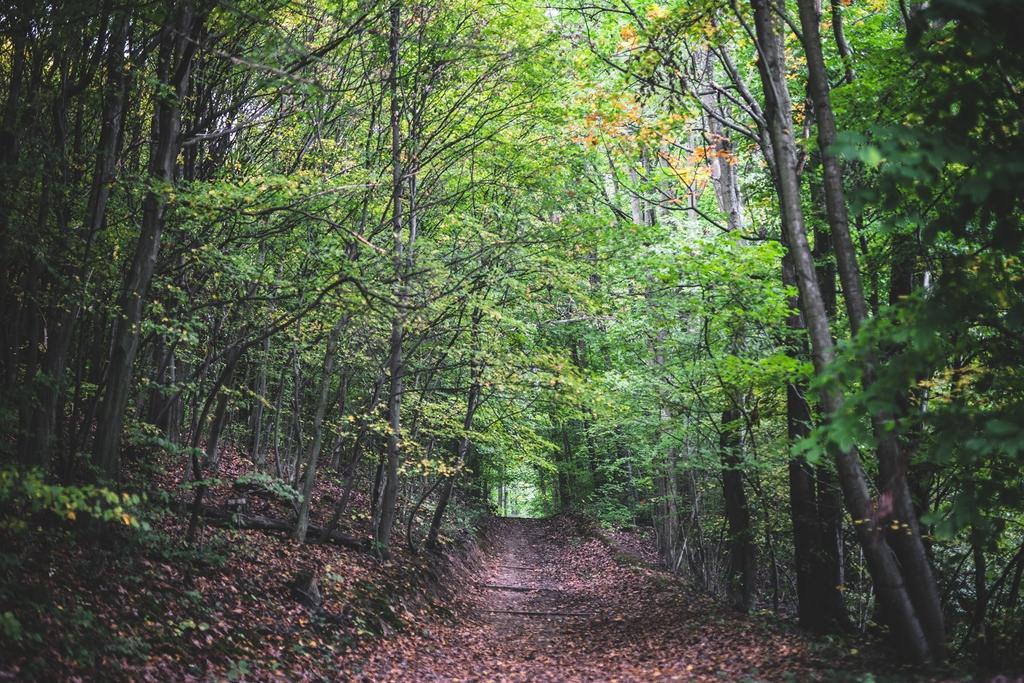 Az erdei turizmus járvány idején is biztonságos