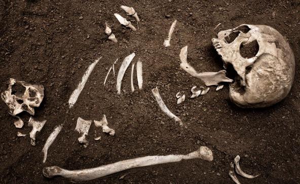 Ismeretlen férfi maradványaira találtak gombaszedés közben