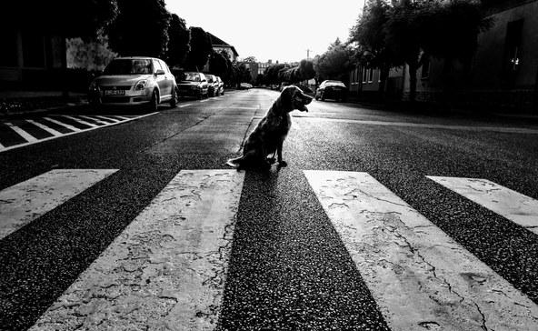 Lehet majd kutyát sétáltatni a kijárási korlátozás alatt