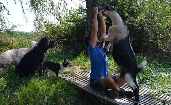 Kivégezték Rozit, a Kutyatár menhely kabalakecskéjét