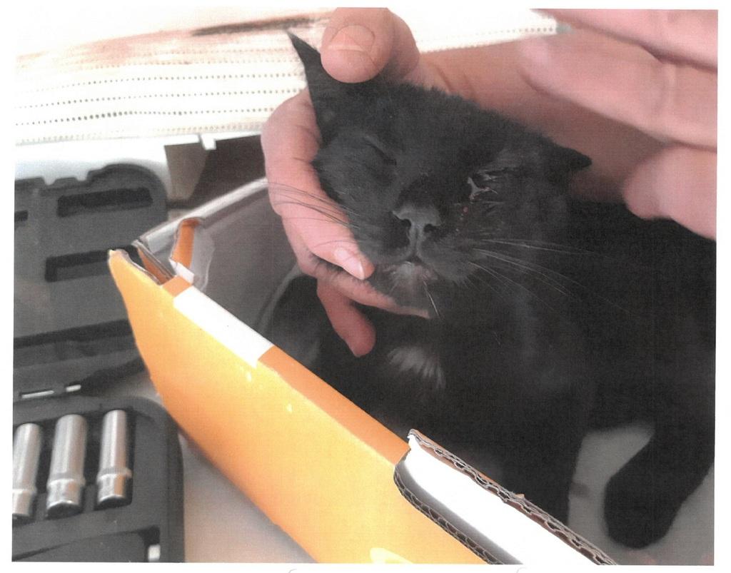 A macska szerencsére csak az egyik életét vesztette el a 9-ből, de a szemét nem