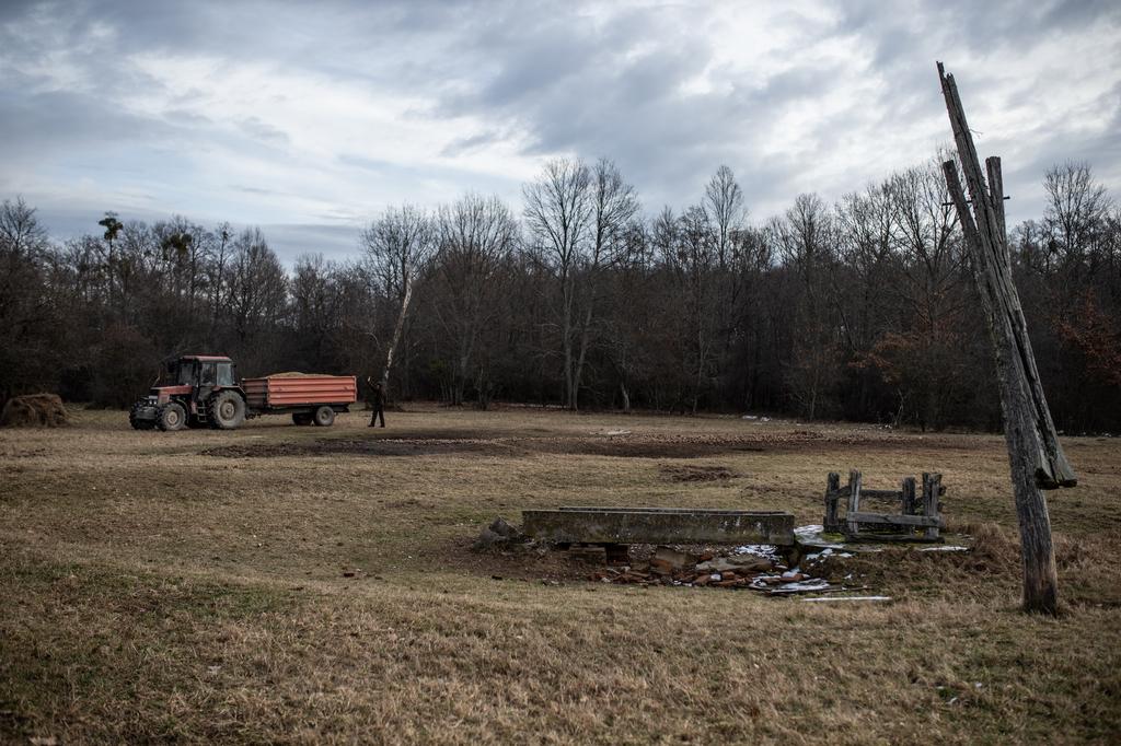 A szemes kukorica mellé kihelyeznek lucernát, szénát és lédús takarmányt is. A traktor éppen kukorica silót hoz.
