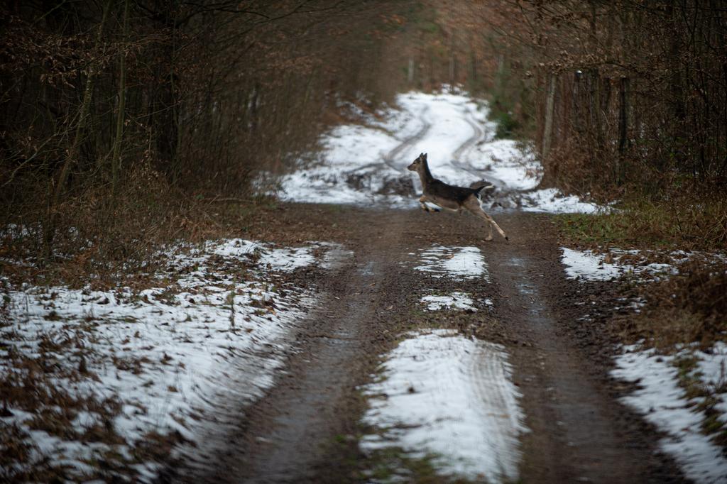Fotók: Röhrig Dániel