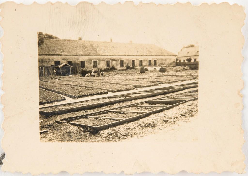 A konzervgyár kertje a palántaágyásokkal