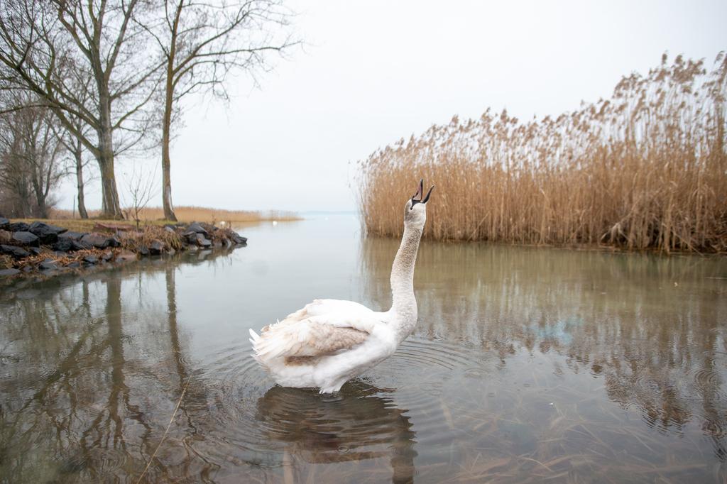 Fotó: Röhrig Dániel