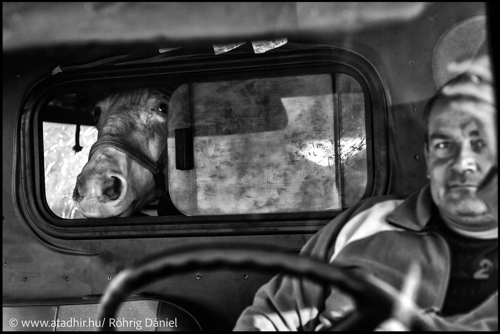 Röhrig Dániel kollégánk két éven át fotózta a lókupeceket Somogyban. A képgalériában ezekből láthatnak egy válogatást.