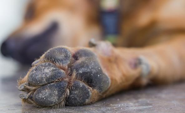 Napokon át hagyta szenvedni sérült kutyáját