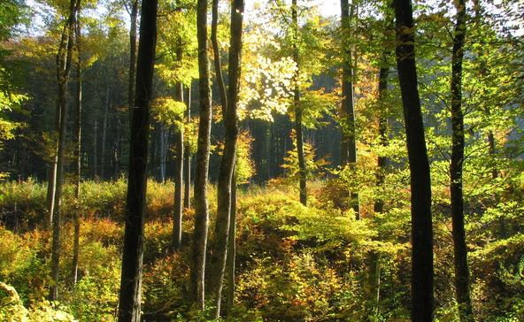 Tegyünk együtt erdőinkért – nem csak a világnapon!