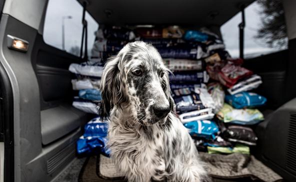 27 bevásárlókocsinyi adomány az állatmenhelynek
