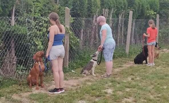 Ismét kutyasuli indul Nagyatádon