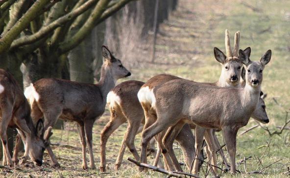 Bukta a délnyugat-balatoni vadászati jogot a német vállalkozó