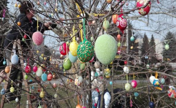 Jövő héten várják a hímes tojásokat a város tojásfájára
