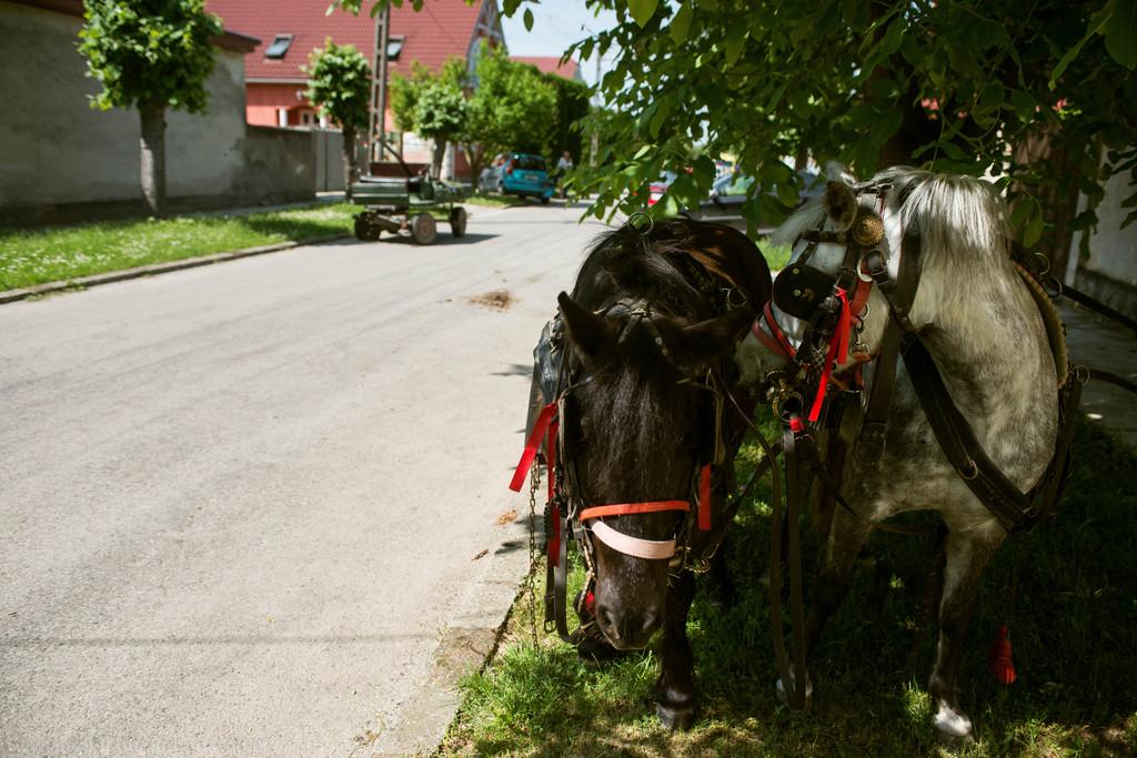 A lovakat az utca lakói fogták össze