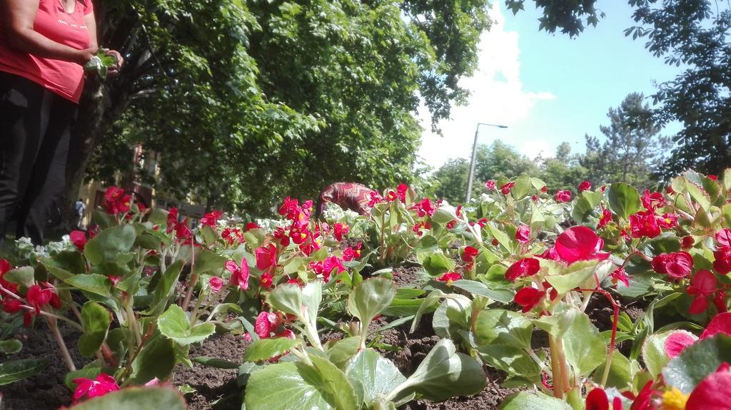 Újra virágba borul a város